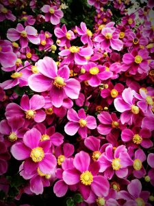 七つ洞公園 花