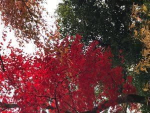 紅葉 大阪 京都
